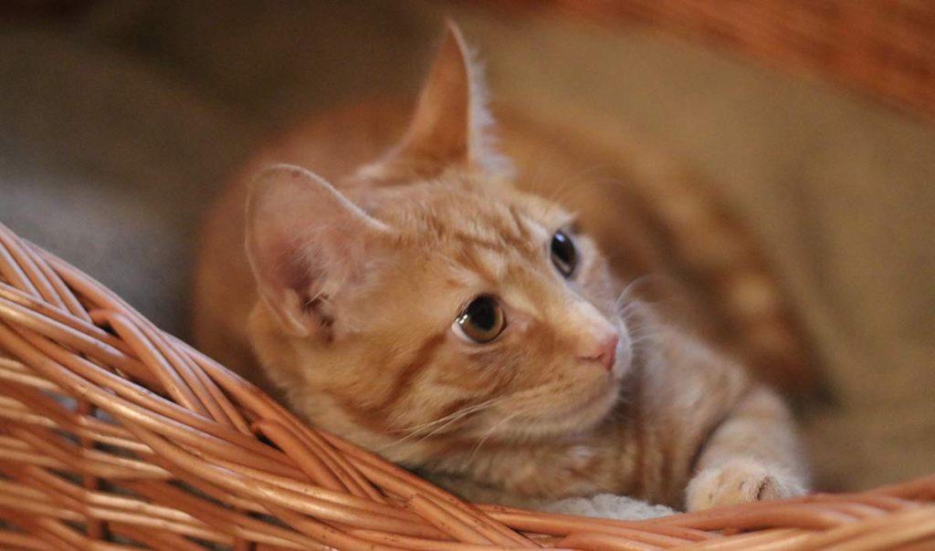Billy's Big Day – Neutering My Kitten