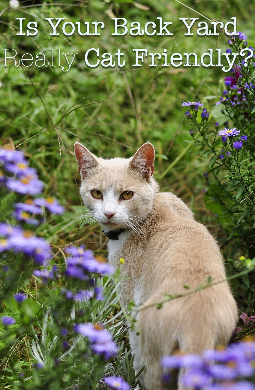 Find Out Whether Your Garden Is Filled With Cat Friendly Plants, Or Whether There Are Poisonous Plants For Cats Lurking In The Beds