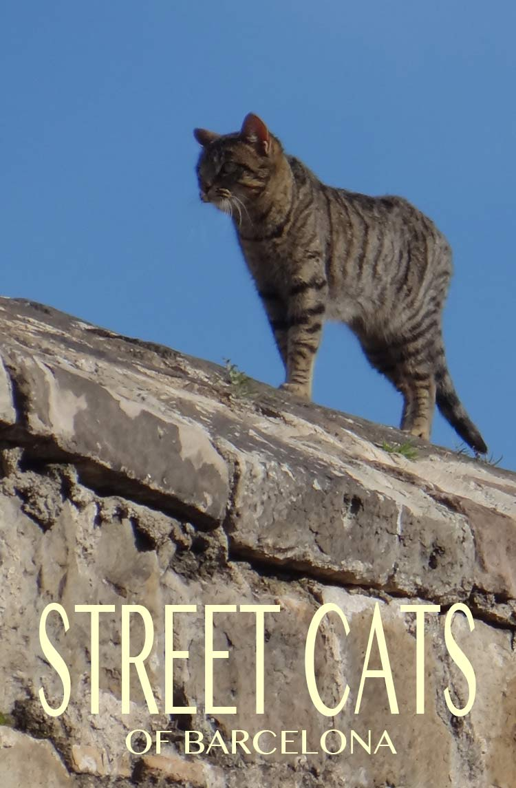 Street Cats of Barcelona