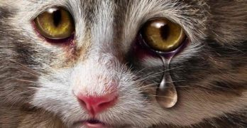 Do Cats Cry? A Guide to Cat Tears and What They Mean