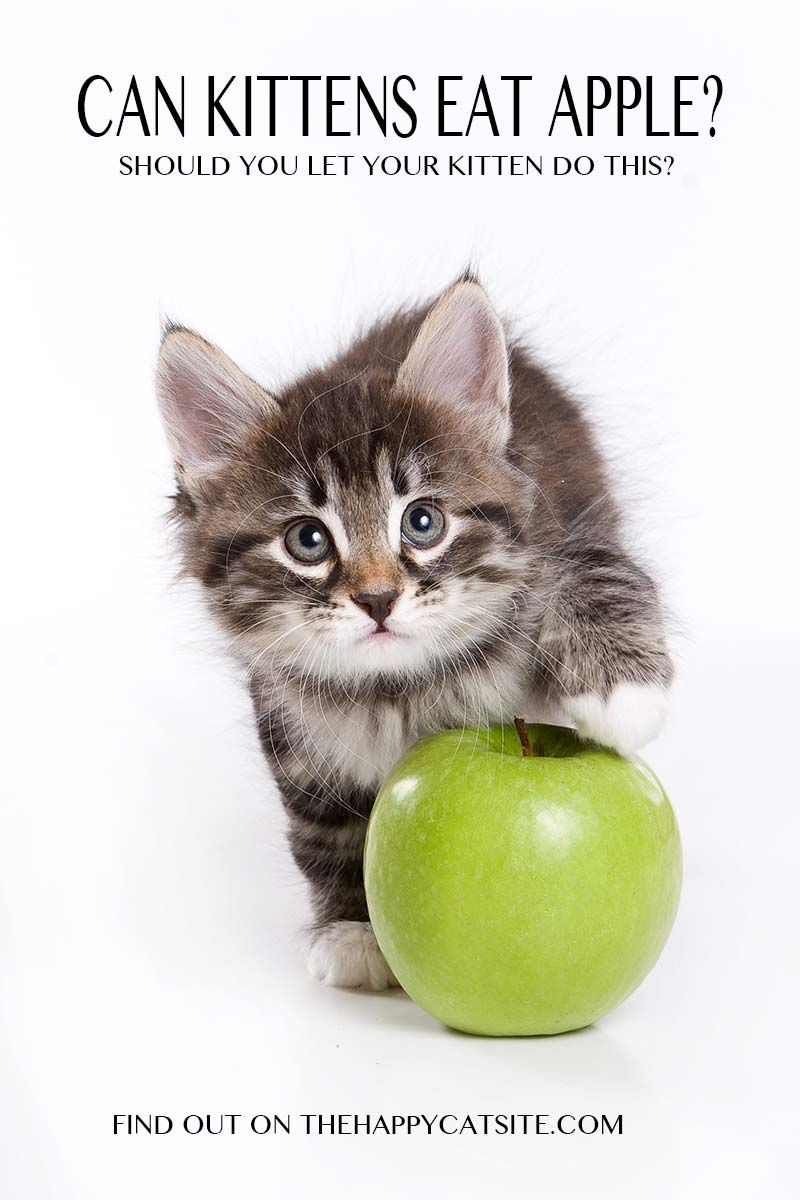 Can cats eat apples? Are they safe for kittens and older cats - we find out!