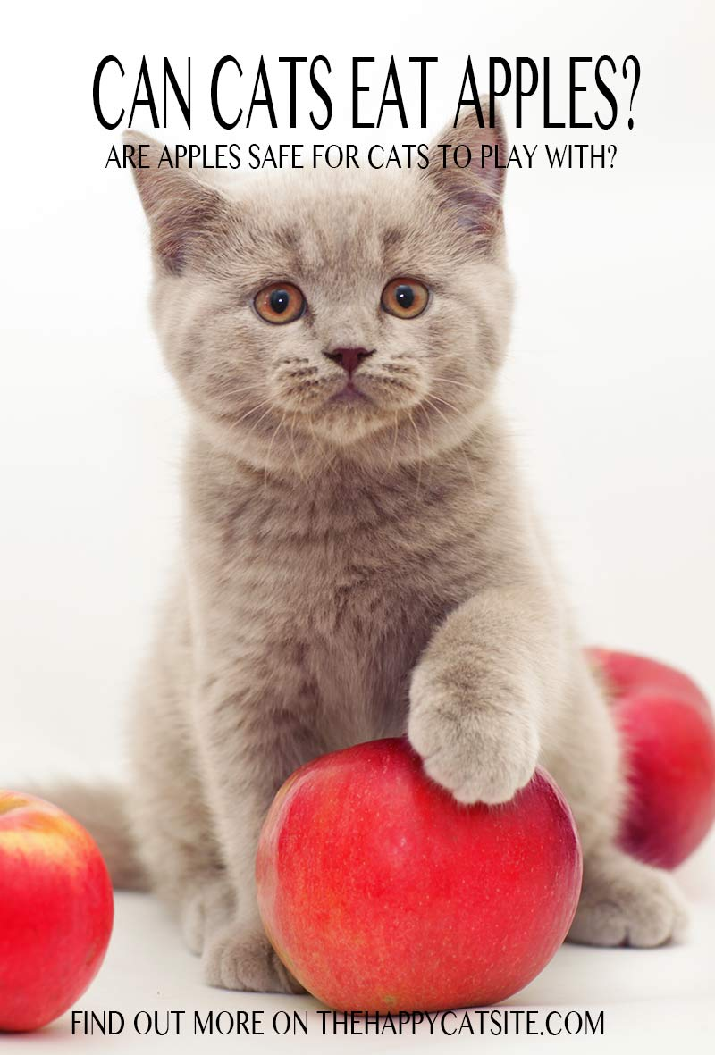 Can cats have apples to eat or play with - find out the pros and cons in this article