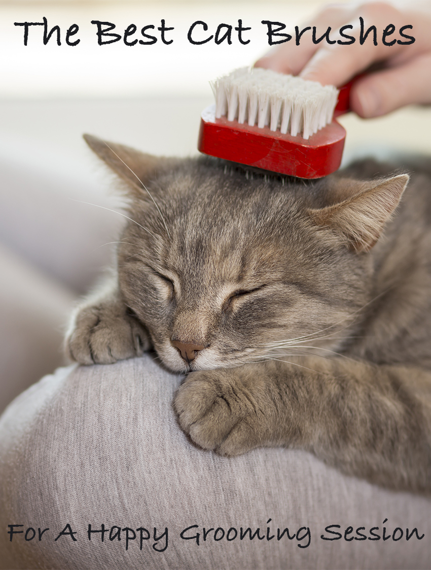 The best cat brush will depend upon your cat's personal requirements. Find out how to pick the right one from the bunch in this article.
