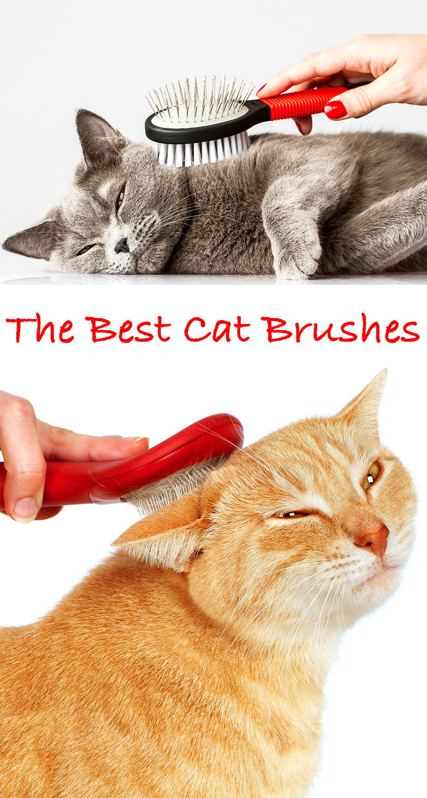 The Best Cat Brush. Choosing the right cat comb and cat grooming toola