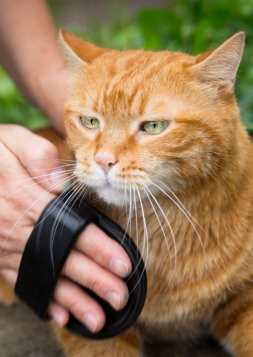 Cat brush gloves are a great way of easily grooming your cat's fur.