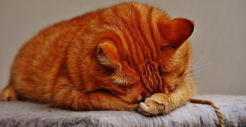 Do Cats Cry? Cat Tears And What They Mean