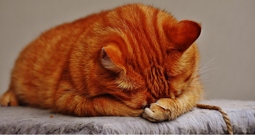 Do Cats Cry? We take a look at cat tears and what they mean