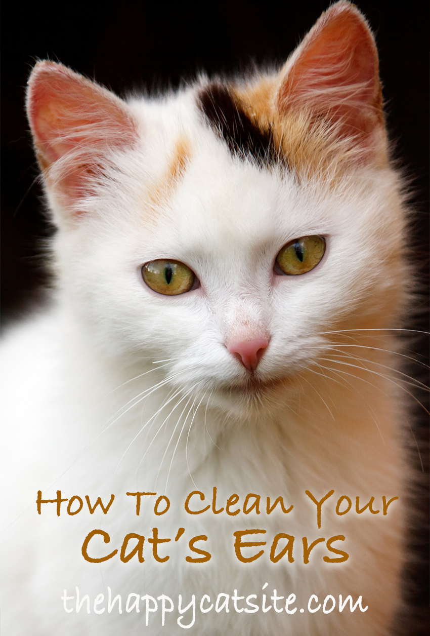 how to clean cats ears