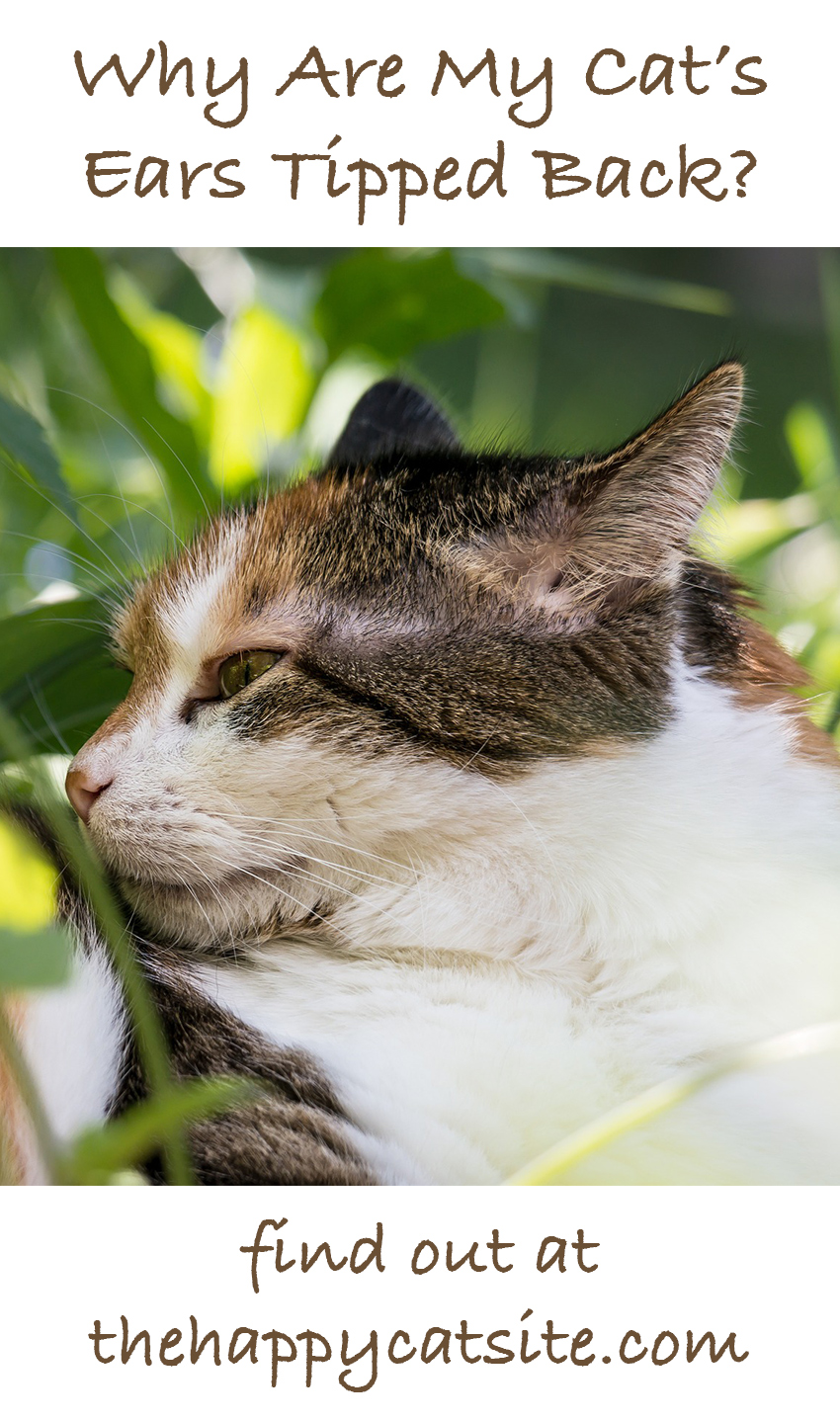 Cat Ears Down? Let's find out what it means when your cat flattens his ears.