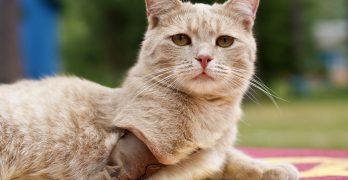 Three Legged Cat – Care, Help & Advice