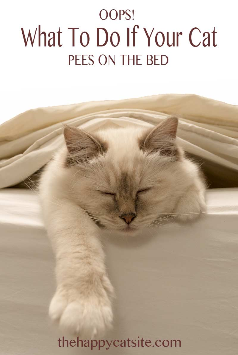 Cat Peeing On Bed Covers - Why They Do It And How To Stop Them!