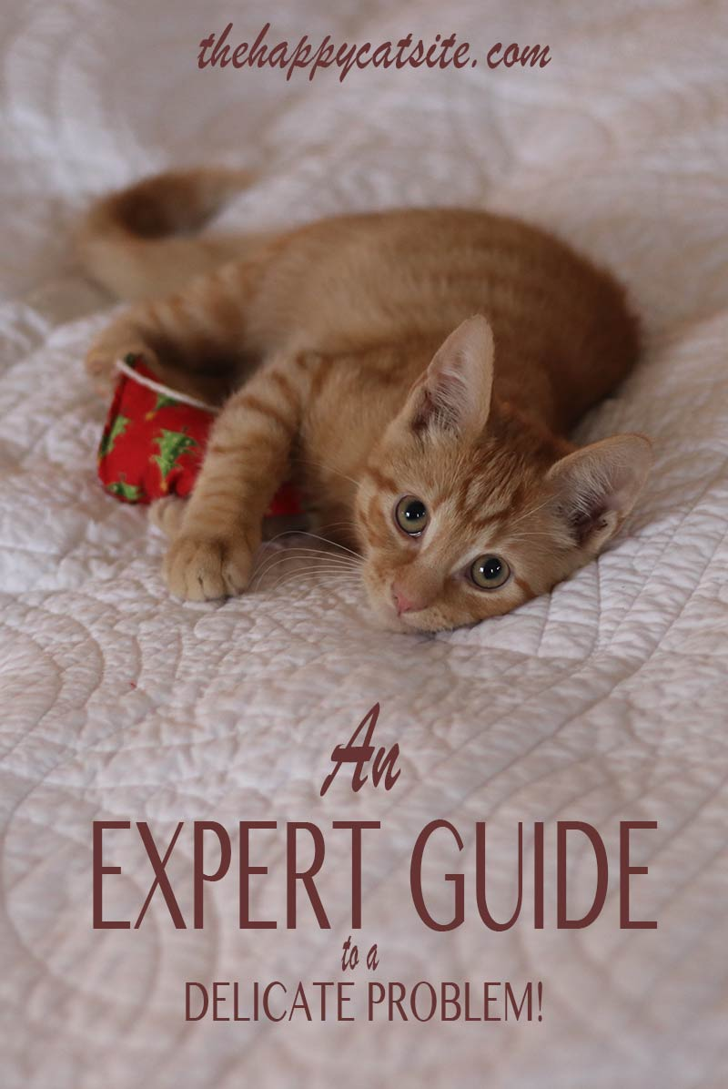 An expert guide to help stop your cat peeing on bed sheets and covers