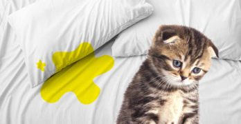 cat peeing on bed