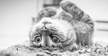 Head Pressing Cats - Looking at the difference between cat head pressing, cat head rubbing and cat head bumping. By an expert cat behaviorist.