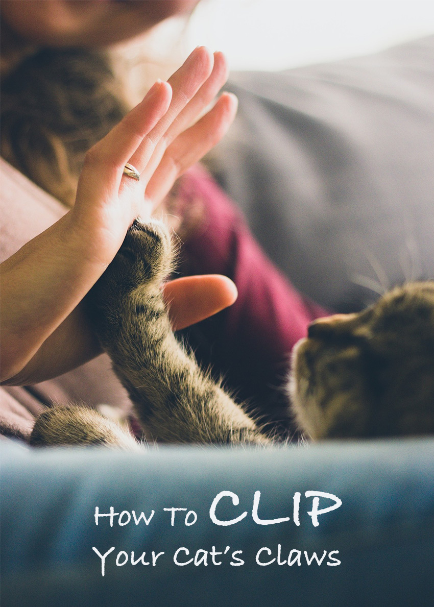 Choosing And Using Cat Nail Clippers - A complete guide from The ...