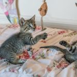 Choosing And Using Cat Nail Clippers