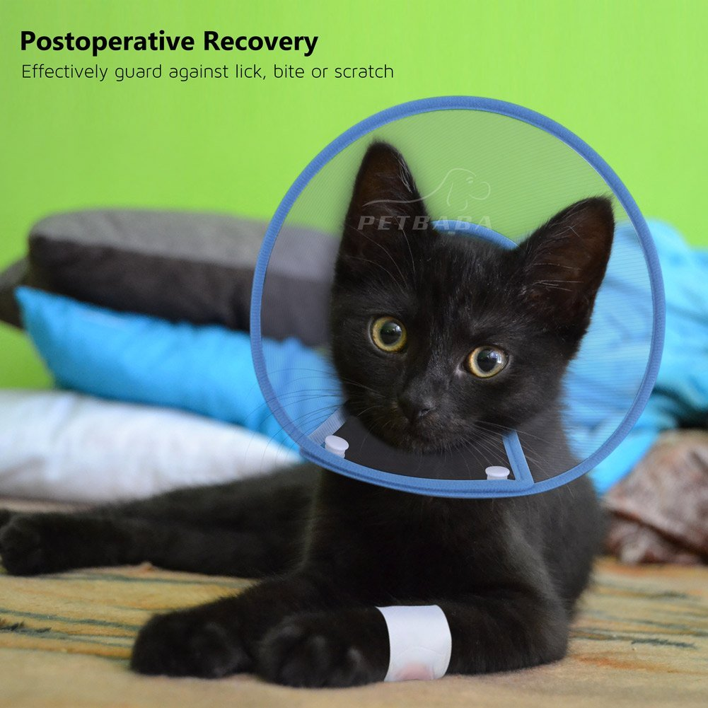 3 legged cats will usually have a post operative elizabethan cat collar