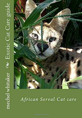 exotic cat care