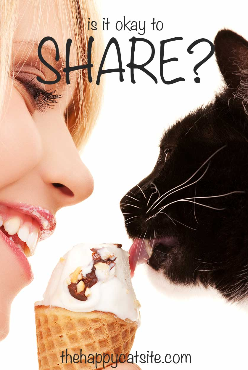 Can cats have ice cream - is it okay to share? Find out in this guide on The Happy Cat Site