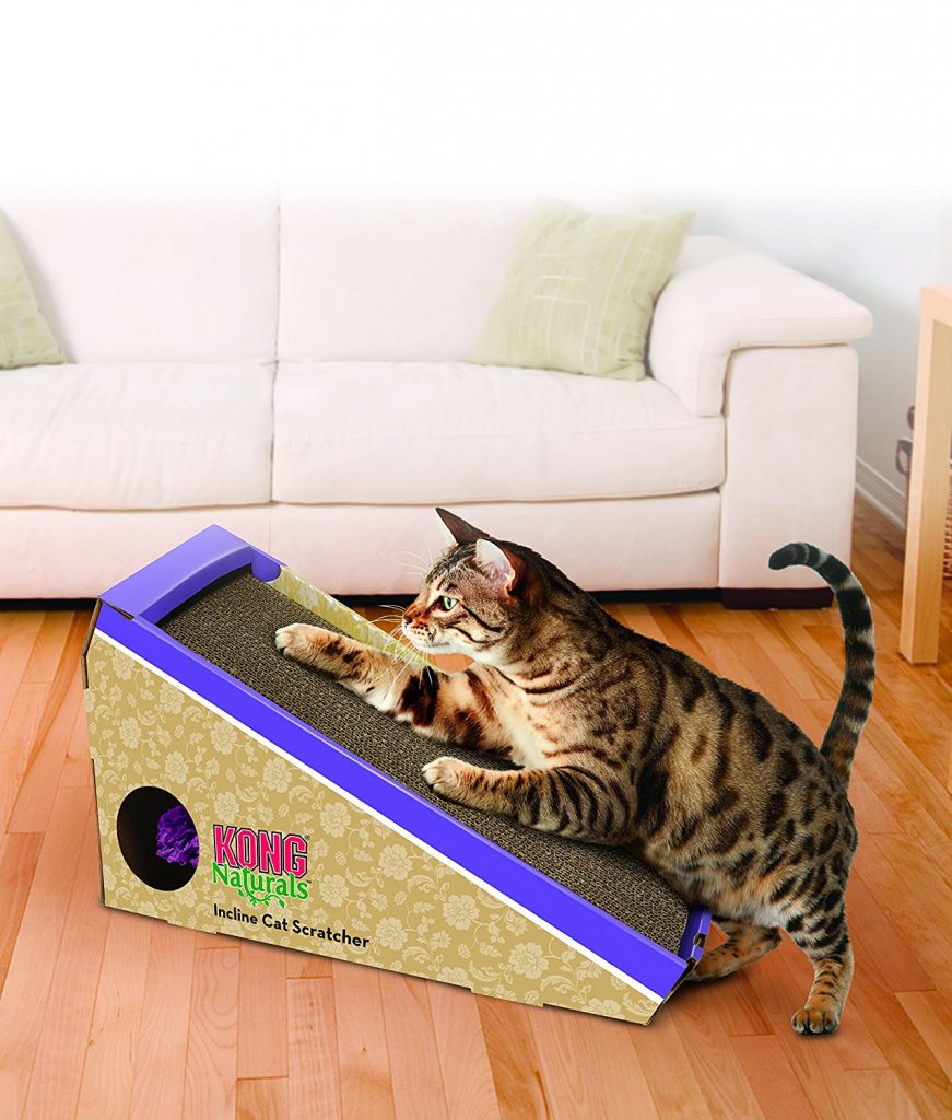 can cat food cause urinary tract infection