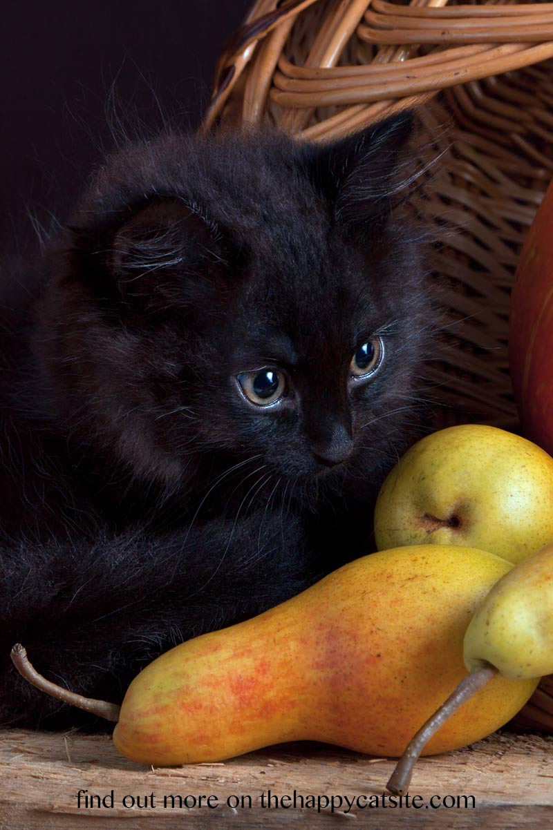 Can cats have pears to eat or play with. Are they harmful - we investigate for you.
