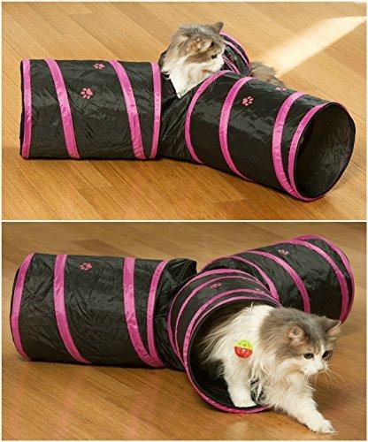 cat obedience school nyc