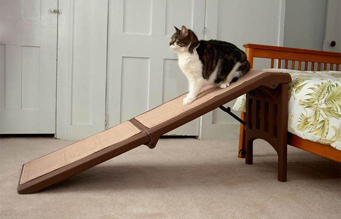 Three legged cats can benefit from cat ramps