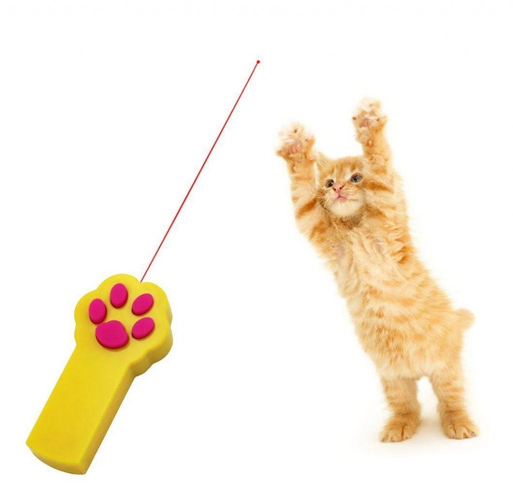 cat behaviour course