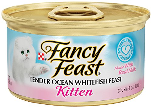 Best Cheap Cat Food