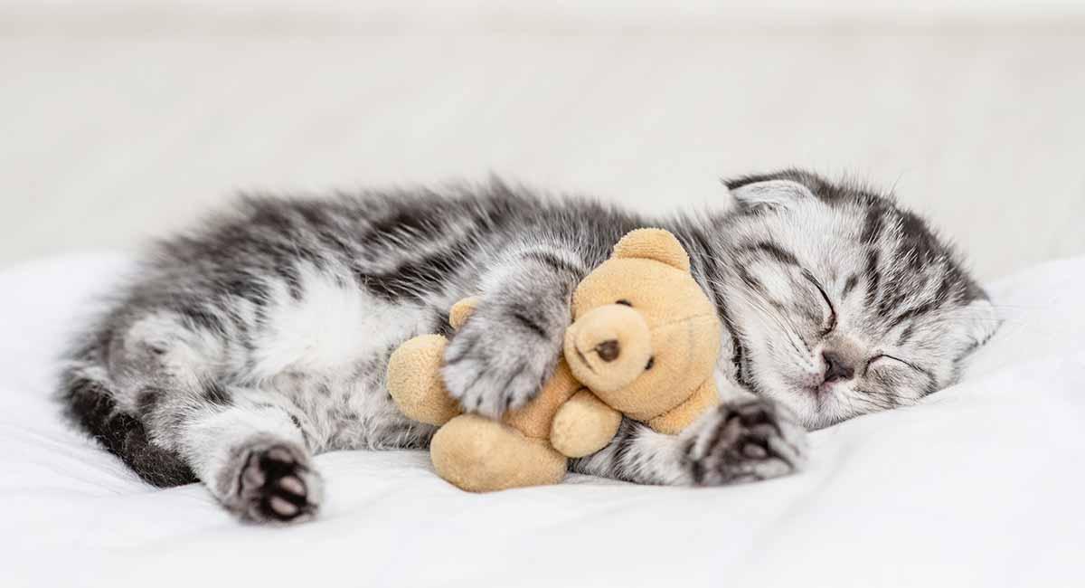 best kitten toys