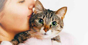 female cat names