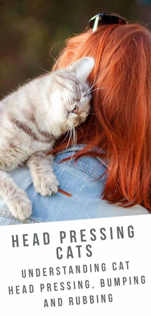 cat head pressing