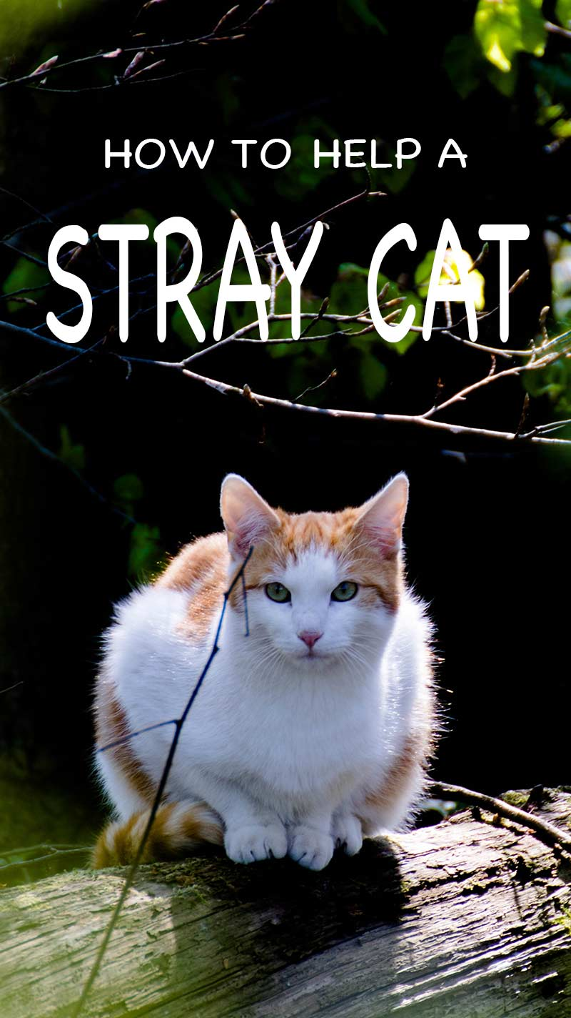 How best to help a stray cat, what to feed a stray cat, and where to take a stray cat if you catch one