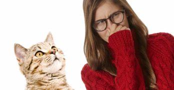 Cat Smells Bad