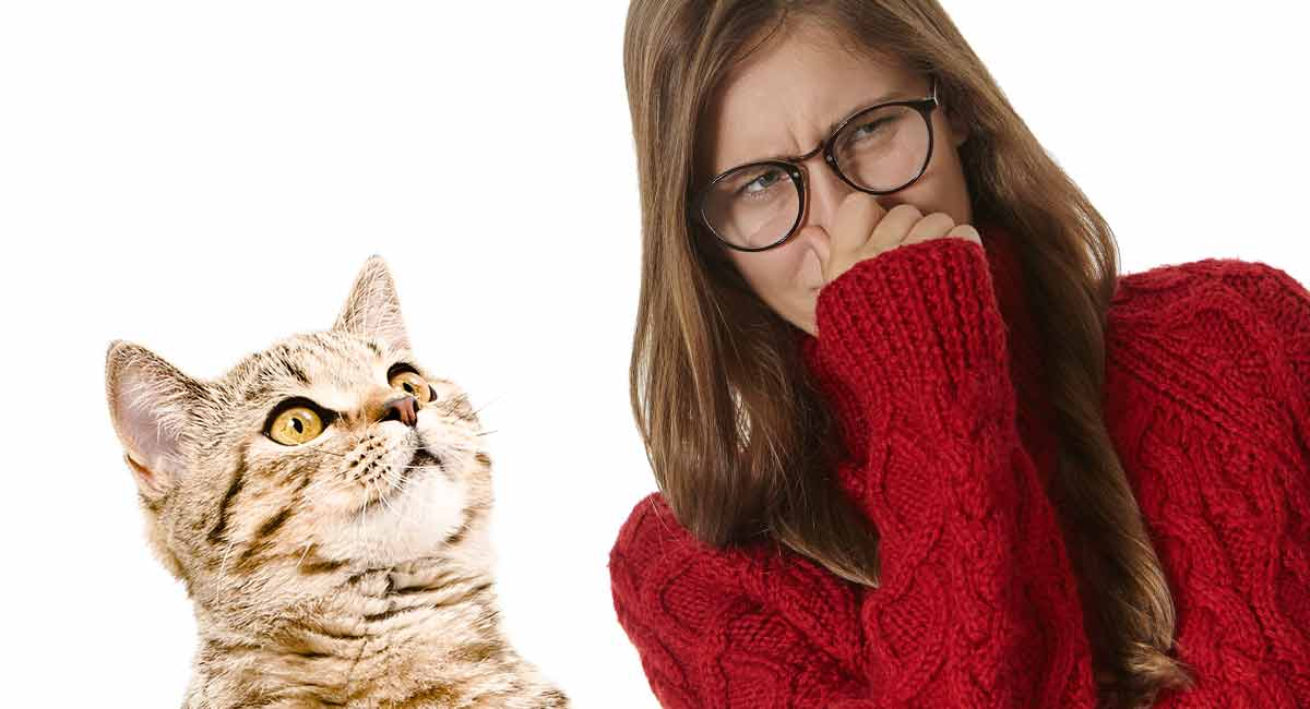Why Does My Cat Smell: What To Do If Your Cat Smells Bad