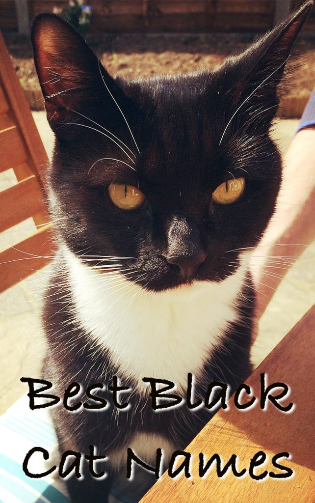 Black Cat Names - 250 Of The Best Names For Your New Kitten!