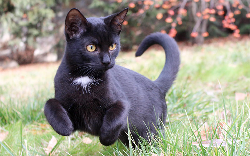 Black Cat Names Male