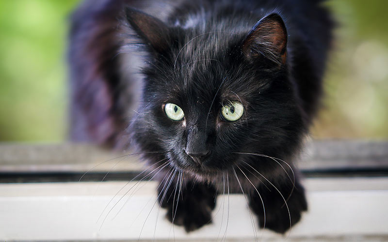 250 Best Black Cat Names For Naming Your New Kitten