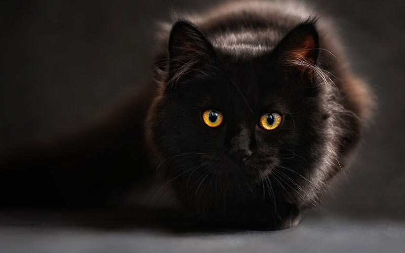 250 Fabulous Black Cat Names