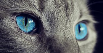 Cat Eye Infection Treatment – can you use human eye drops on cats?