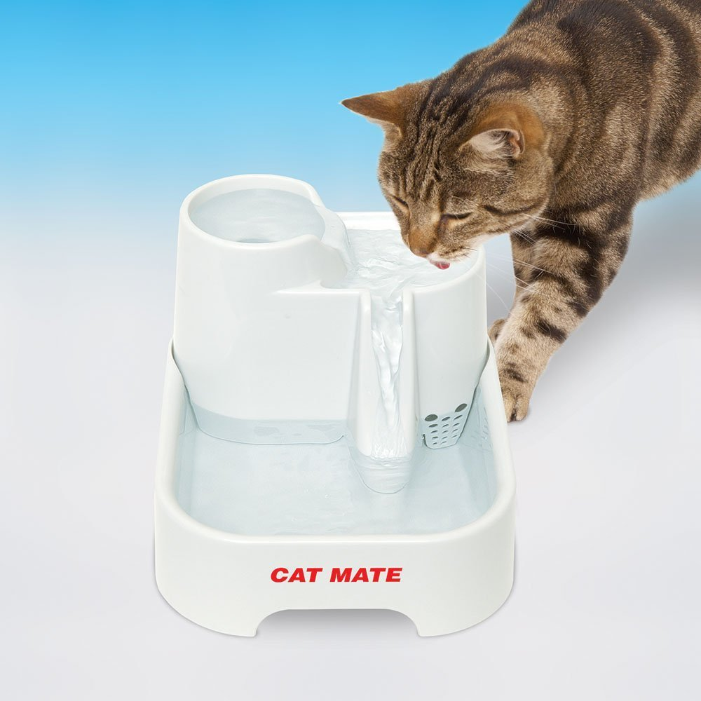 Your Cats Drinking Water Tips Fountains And Our Favorite Water
