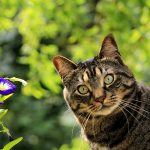 Why Does My Cat Smell?