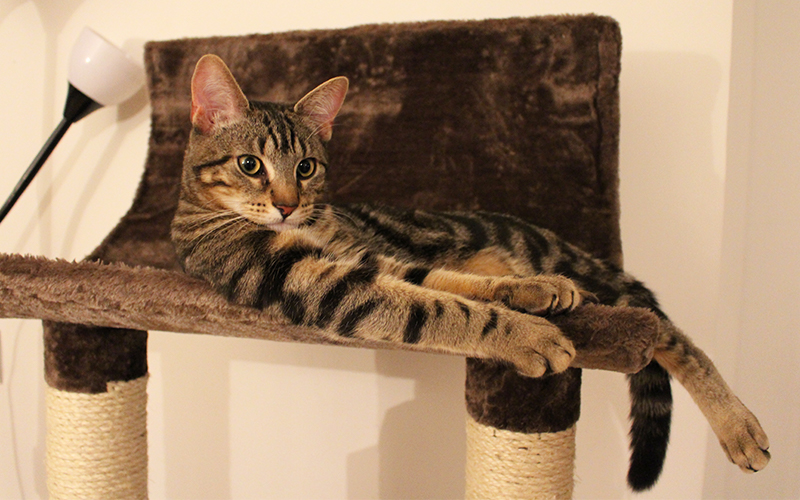 however some animal experts say that at least for cats who have never experienced life on the outside it is both kinder and safer to opt for sprucing up     helping you to choose the very best cat tree with hammock  rh   thehappycatsite