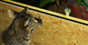 Cats And Snakes – Are they afraid of each other?