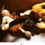 Black Cat Names – 250 Amazing Ideas