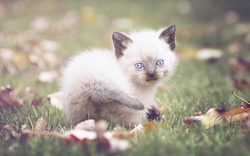 Cute Girl Cat Names - 200 Ideas For Brilliant Cute Girl Cat Names