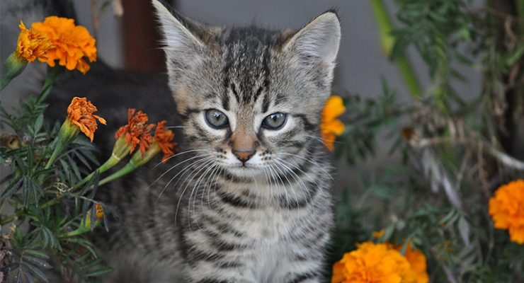 Cute Cat Names – 200 Top Choices For Pretty Kitties!