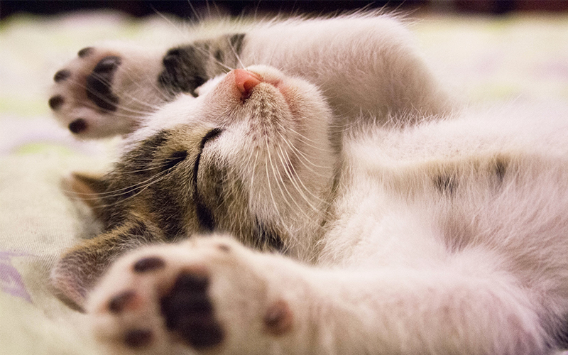 heat exhaustion in cats treatment