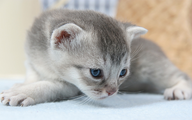 Cute Grey Kitten Names - Over 200 Ideas