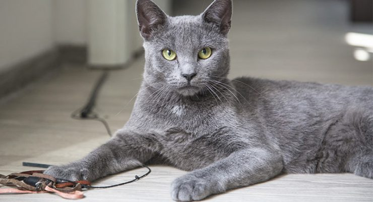 Names for Grey Cats - 100 great ideas